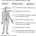 Atividades de ciências sobre o sistema nervoso em sala de aula